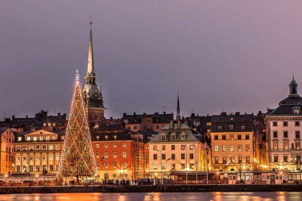 В Стокгольме начали устанавливать рождественские ели